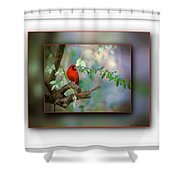 Northern Cardinal Shower Curtain by Robert L Jackson
