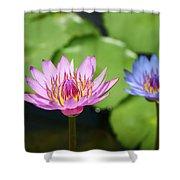 Pink Lotus Water Flower Shower Curtain