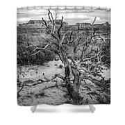 Pinyon Pine Shower Curtain
