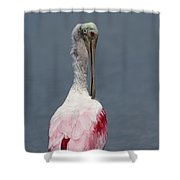 Roseate Spoonbill Preening Shower Curtain