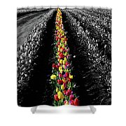 Rows Of Tulips Shower Curtain