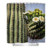 Saguaro Blooms To The Sky  Shower Curtain