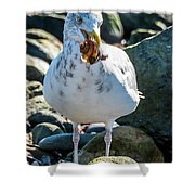 Seagull With Sail Shower Curtain