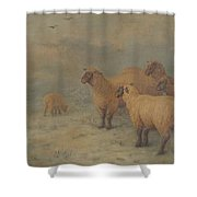 Sheep On Moorland Shower Curtain
