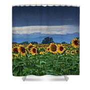 Sunflowers Under A Stormy Sky Shower Curtain by John De Bord