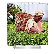 Tea Picker In Kenya Shower Curtain