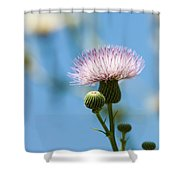 Thistle With Blue Sky Background Shower Curtain