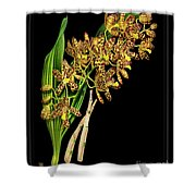 Vintage Orchid Print On Black Paperboard Shower Curtain