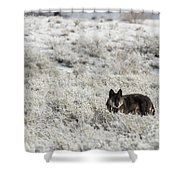 W18 Shower Curtain by Joshua Able's Wildlife