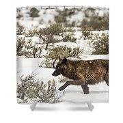 W3 Shower Curtain