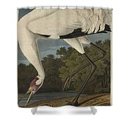 Whooping Crane  From The Birds Of America  Shower Curtain