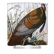 Wild Turkey  Male  Shower Curtain