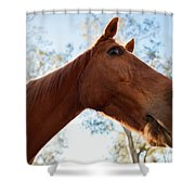 Horse In A Countryside Shower Curtain