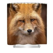 Russian Red Fox Shower Curtain