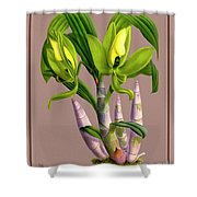 Orchid Vintage Print On Colored Paperboard Shower Curtain