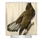White Headed Eagle  Shower Curtain