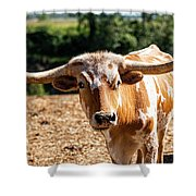 Longhorn Bull In The Paddock Shower Curtain