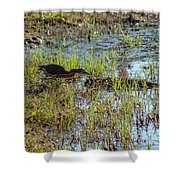 Green Heron Looking For Food Shower Curtain
