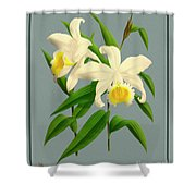Orchid Vintage Print On Tinted Paperboard Shower Curtain