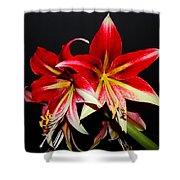 Amaryllis Shower Curtain