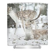 Beautiful Image Of Fallow Deer In Snow Winter Landscape In Heavy Shower Curtain