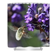 Fly Bee Shower Curtain