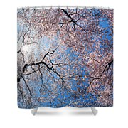 Low Angle View Of Cherry Blossom Trees Shower Curtain