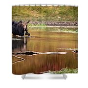 Moose At Green Pond Shower Curtain