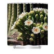 Saguaro Blossoms  Shower Curtain