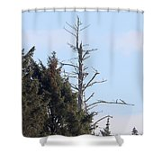 Ruby Beach Sunshine Shower Curtain