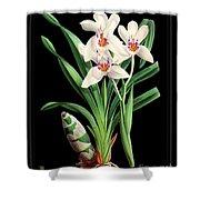 Vintage Orchid Print On Black Paperboard Shower Curtain