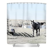 3 Mules Shower Curtain