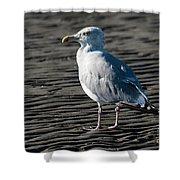 Seagull On Beach Shower Curtain