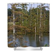 Tennesse Cypress In Wetland  Shower Curtain