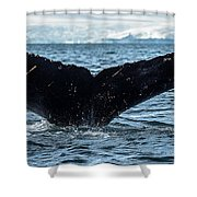 Whale In The Ocean, Southern Ocean Shower Curtain