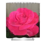 Pink Rose Shower Curtain