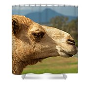 Camel Out Amongst Nature Shower Curtain