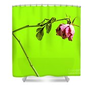 Dying Flower Against A Green Background Shower Curtain