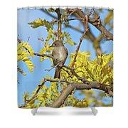 Willow Flycatcher Shower Curtain