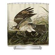 Winter Hawk  Shower Curtain