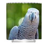 African Grey Parrot Shower Curtain by Rob D Imagery