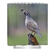 California Quail Shower Curtain