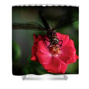 Dragonfly On A Flower Of A Red Rose. Macro Photo Shower Curtain