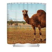 Large Beautiful Camel Shower Curtain