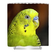 Portrait Of Budgie Birds Shower Curtain