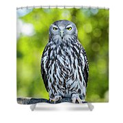 Barking Owl Shower Curtain by Rob D Imagery