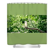 Beautiful Barn Owl Shower Curtain by Rob D Imagery