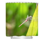 Small Beautiful Dragonfly Shower Curtain