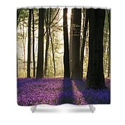 Stunning Bluebell Forest Landscape Image In Soft Sunlight In Spr Shower Curtain