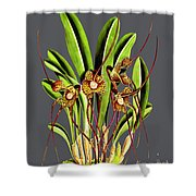 Orchid Old Print Shower Curtain